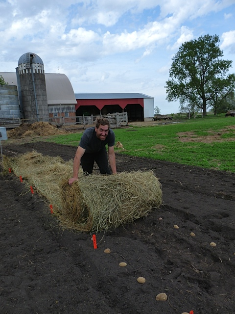 Rolling out the round bale at New Story Farm