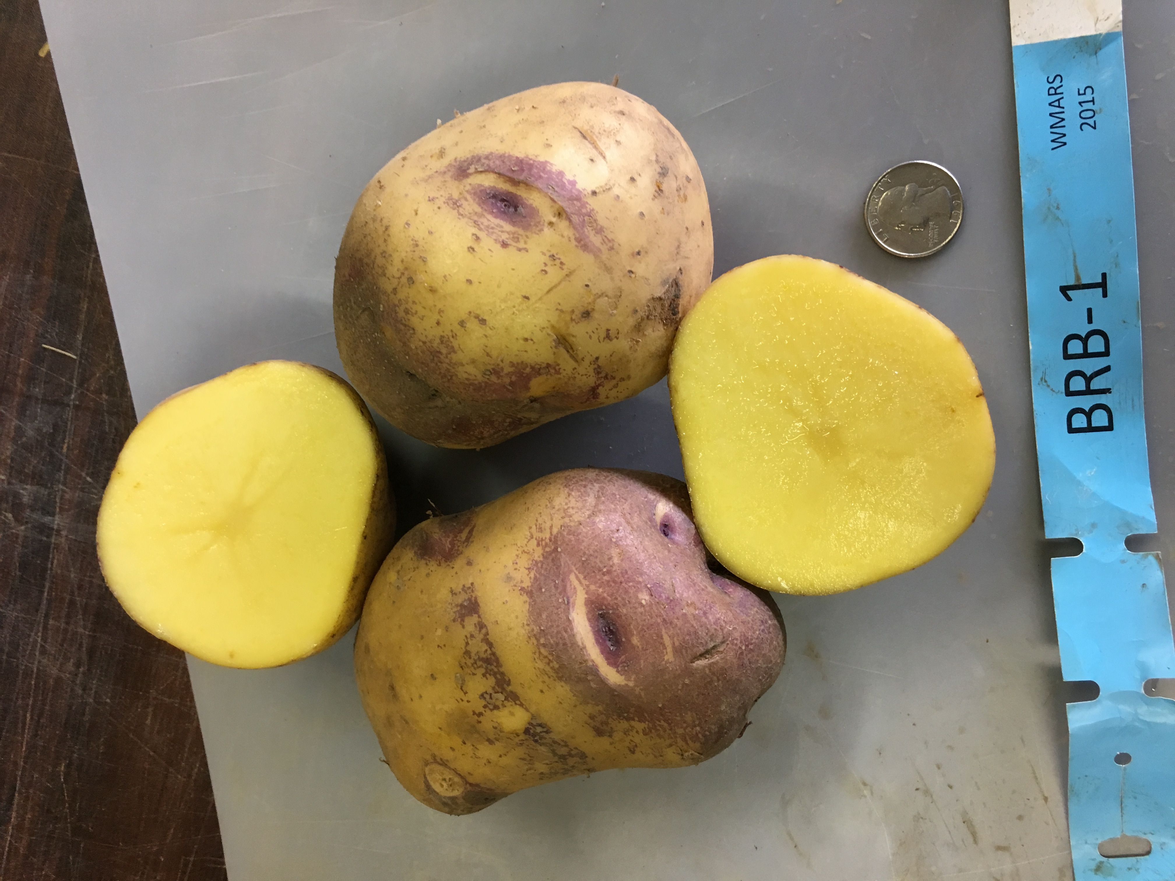 Barbara potato varieties, trialed this year. Photo by Ruth Genger